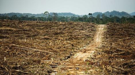 Es bewegt sich was in der Palmöl-Diesel-Frage