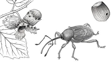 Der Letzte seiner Zunft: der wissenschaftliche Zeichner Armin Coray