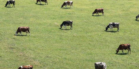 """Grüne Woche: Zu wenig Forschung für den """"Klima""""landbau"""