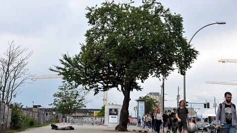 Der härteste Baum von Berlin
