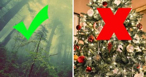 Mit dem Weihnachtsbaum die Welt retten