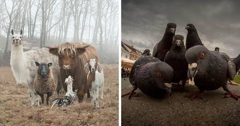 Das Tierchen in uns allen