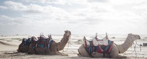 Vom Kamel im Nadelöhr und anderen folgenreichen Übersetzungsfehlern