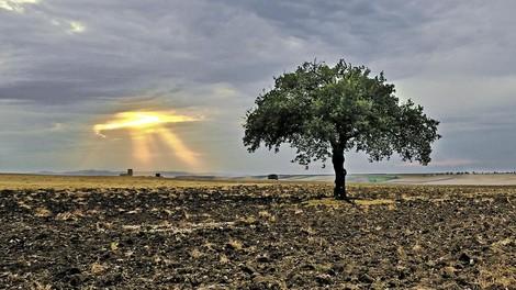 Der Erdboden als CO2-Senke – eine Waffe im Kampf gegen den Klimawandel?