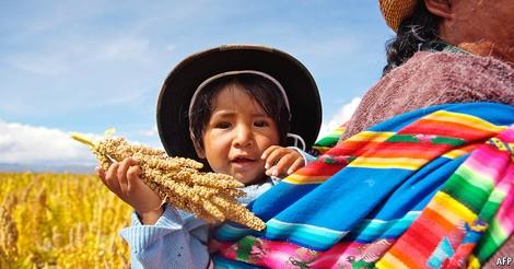 Ökonomische Quinoa-Kritik