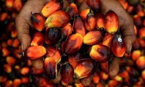 "Palmöl als Regenwald-Killer – der ""Guardian"" mit großer Multimedia-Reportage"
