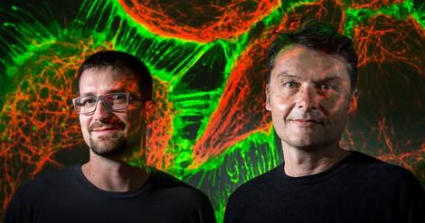 Wissenschaft gamifiziert: In EVE Online helfen SpielerInnen der Zellforschung
