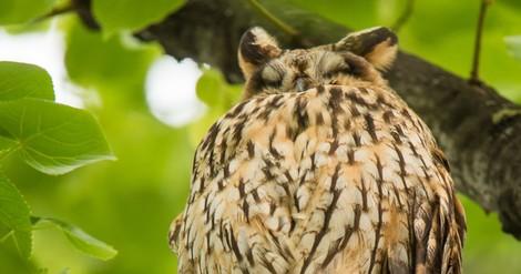 Auch Vögel schlafen. Doch warum eigentlich?