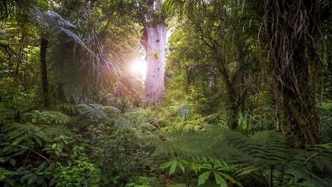 Bäume pflanzen: Ist das jetzt die Lösung?