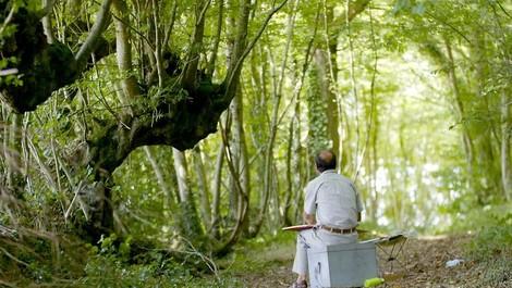 Lebensraum Kopfbaum - vom nachhaltigen Nutzen des Baumschnitts