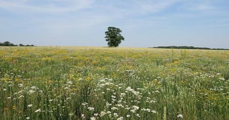 Nur weil die Wiese bunt ist, nützt sie nicht automatisch der Artenvielfalt