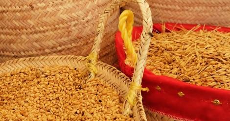 Die tunesischen Saatgut-Rebellen: Wie Landwirte sich unabhängig machen