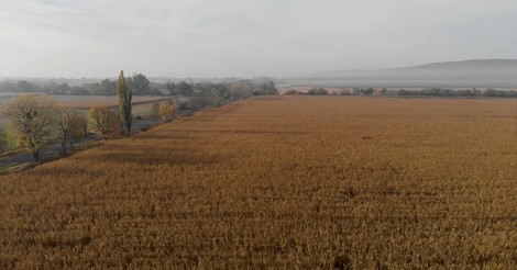 Wie die Agrarsubventionen der EU Korruption befeuern