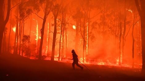 Australien: Nie da gewesene Waldbrände