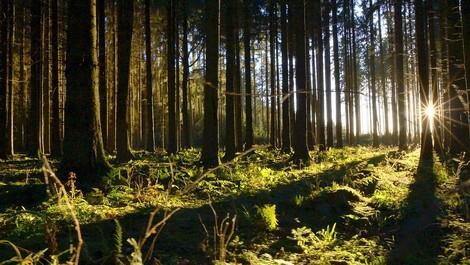 Unsere Wälder - Die Sprache der Bäume