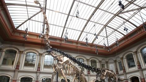 Raubkunst, Dinoknochen und Leichen im Keller deutscher Museen: Die Debatte um die Restitution