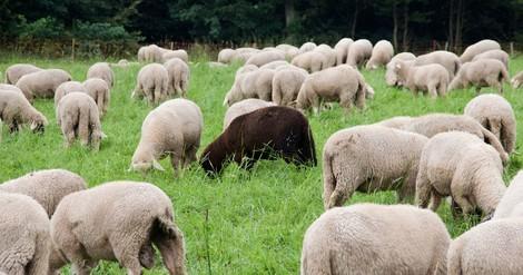 Wieso die Idee der Herdenimmunität zurzeit keine gute Option ist