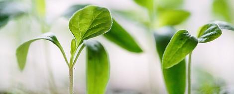 Biologisch abbaubarer Kunststoff - endlich machbar?