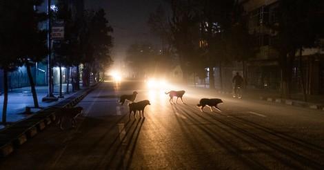 Kabuls Hunde und wofür sie metaphorisch stehen