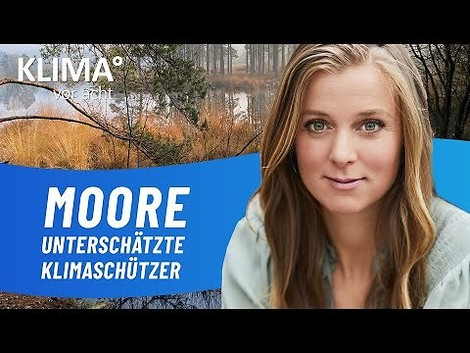 Klima vor acht: Warum es so wichtig ist, Moore zu schützen