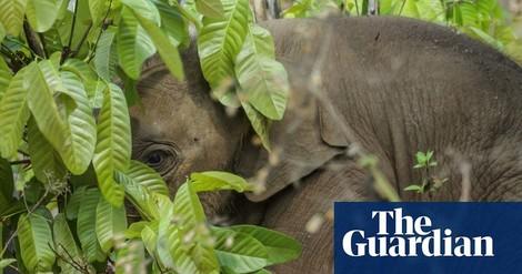 Wie der Elefant verschwand – die irre Flucht einer Zirkusfamilie