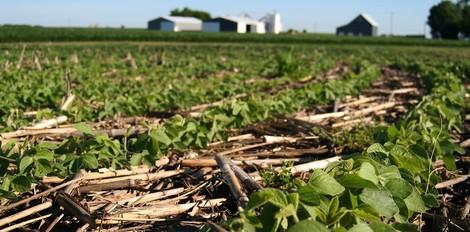 Mit Digitalisierung eine nachhaltigere Landwirtschaft erreichen